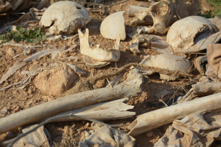 Bones and skull fragments of Yazidis killed by IS near Sinjar City. The civilians that were massacred at this site were attempting to flee to safety when they were rounded up by jihadists and brought to this site in trucks. Evidenc of clothing found by Yazda suggests that men, women, and children were executed at this site. Photo: Yazda