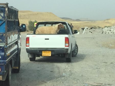 HRW personnel witness KDP asa'ish preventing a Yazidi man from transporting a single sheep for a funeral. Photo: 2016 Belkis Wille/Human Rights Watch